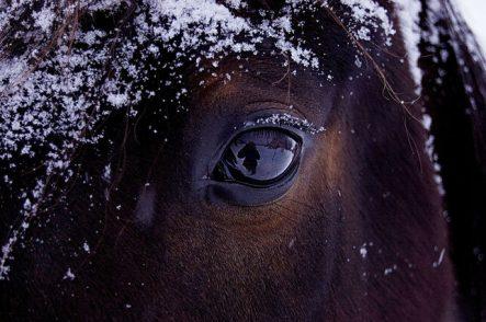 """# 5 Hablando con """"El caballo de Nietzsche"""""""