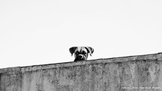 #50 Ciudad Especista: Abriendo grieta